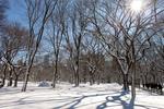central park, snowed