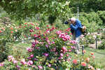 bill cunningham, brooklyn botanic garden