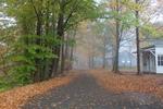 ashokan in fog