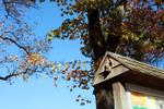 birdhouse in my sign